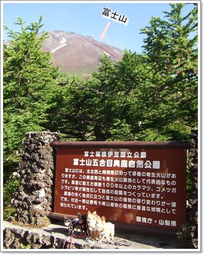 2010718-7.jpg