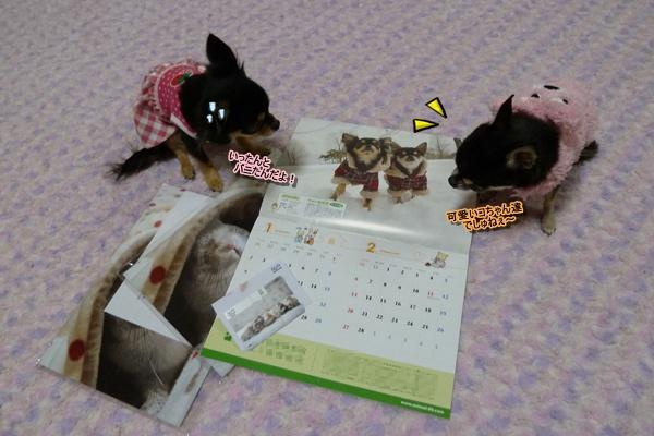 2011-1_20101209172338.jpg