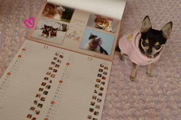 2011-2_20101201160529.jpg