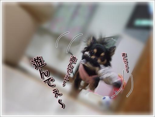 5_20100506174750.jpg