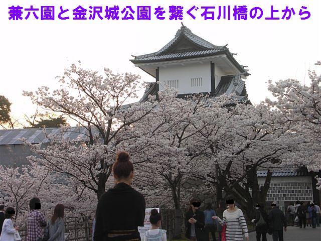 観桜期・金沢城公園 (1)