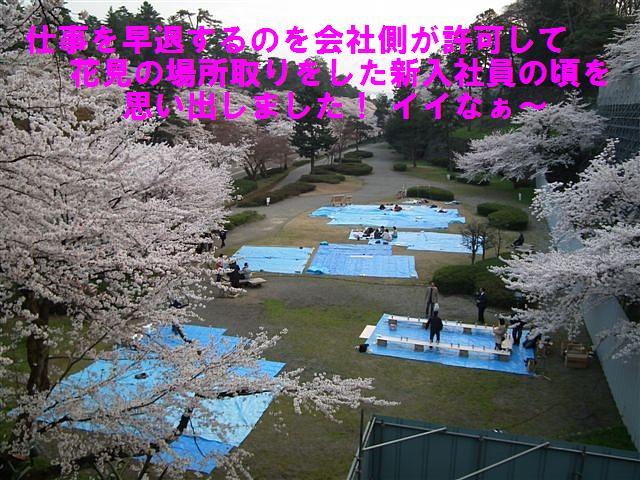 観桜期・金沢城公園 (2)