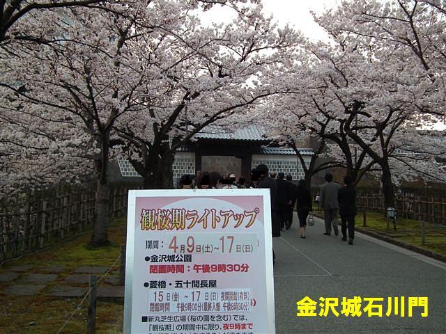 観桜期・金沢城公園 (3)