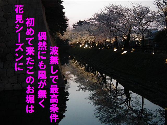 観桜期・金沢城公園 (5)