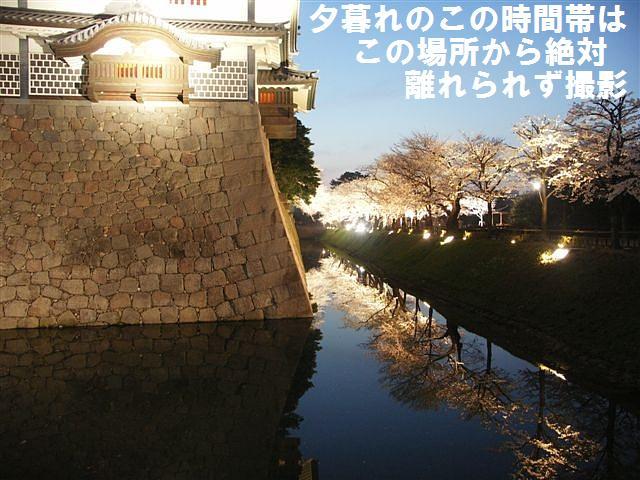 観桜期・金沢城公園 (6)