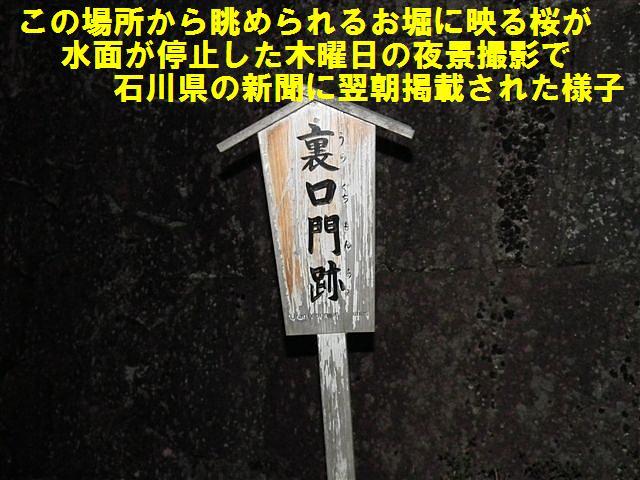 観桜期・金沢城公園 (11)
