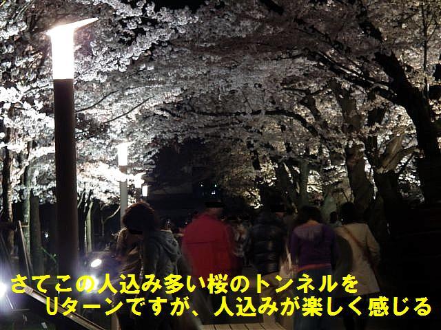 観桜期・金沢城公園 (13)