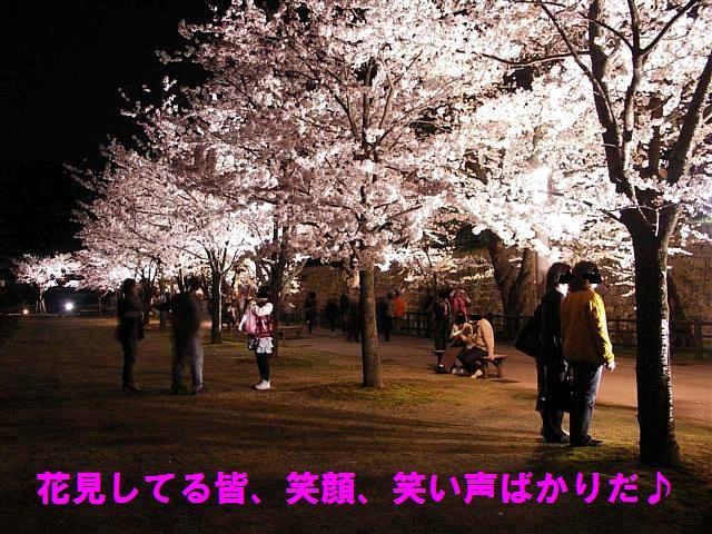 観桜期・金沢城公園 (14)