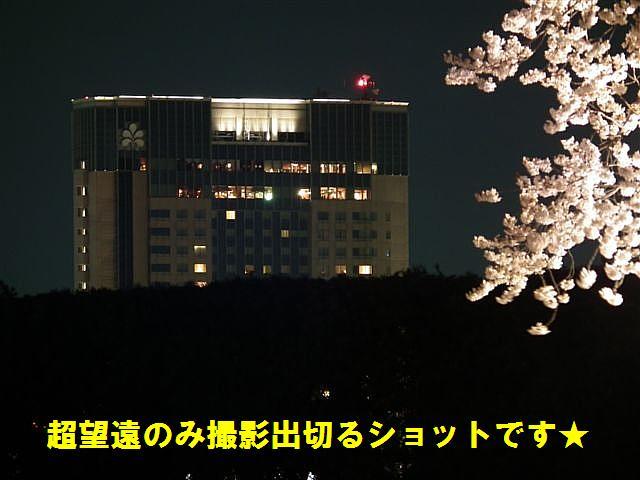 観桜期・金沢城公園 (19)