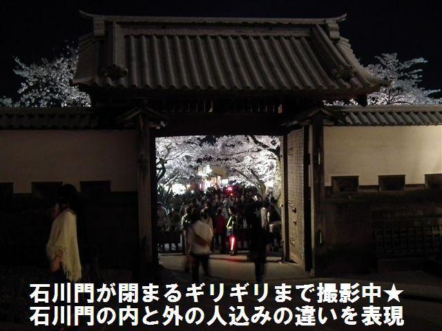 観桜期・金沢城公園 (20)