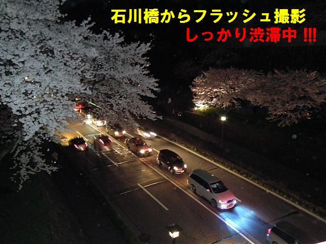 観桜期・金沢城公園 (22)