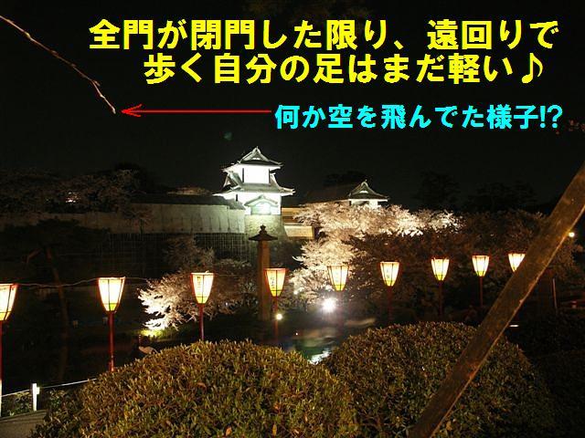 観桜期・金沢城公園 (27)