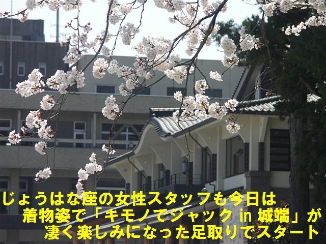城端しだれ桜まつり (3)