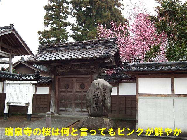 城端しだれ桜まつり (4)