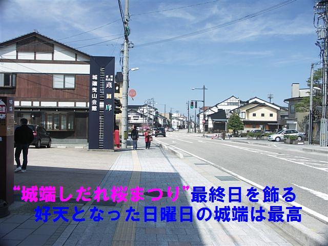 城端しだれ桜まつり (7)
