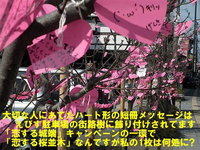 城端しだれ桜まつり (10)