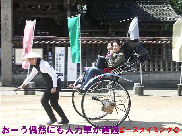城端しだれ桜まつり (12)