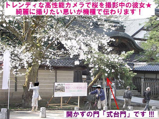 城端しだれ桜まつり (14)