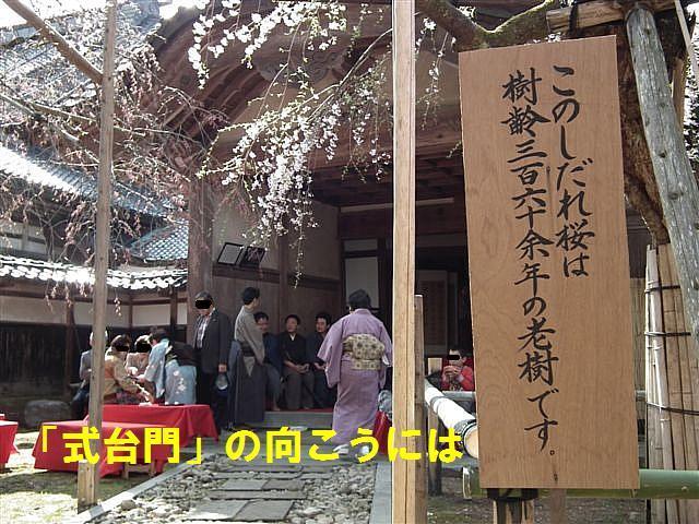 城端しだれ桜まつり (15)