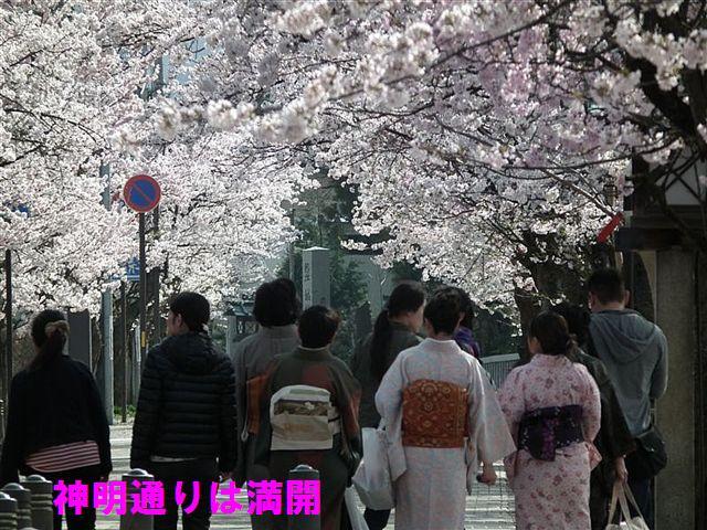城端しだれ桜まつり (21)