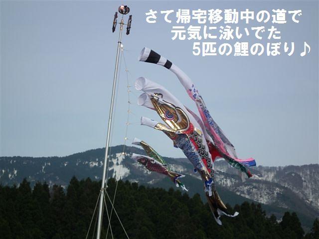 城端しだれ桜まつり (33)