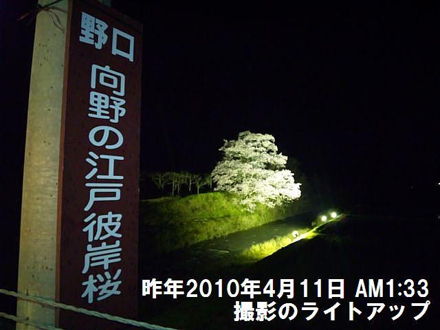 写真教室の桜 (7)