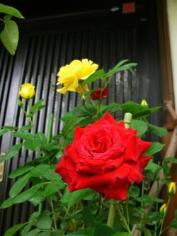 P1060436_convert_20110527211104.jpg