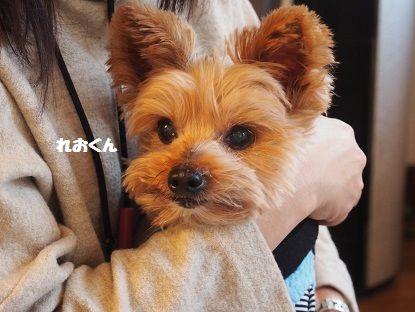 奈良から13
