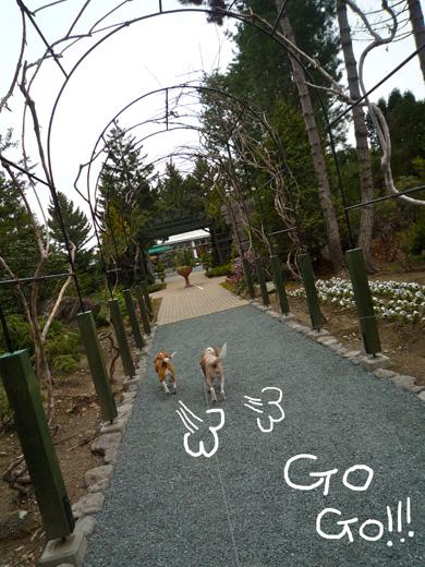 庭園gogo!!P1060296