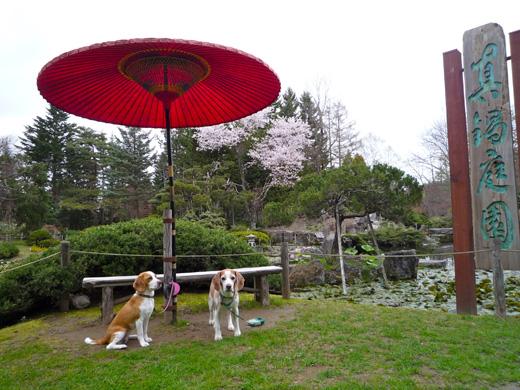 真鍋庭園の赤い傘P1060211