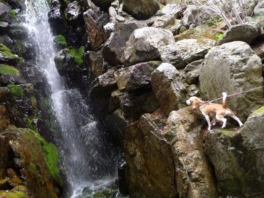 R滝の崖っぷちP1060256