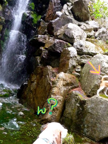 滝で?P1060258_convert_20110524004234