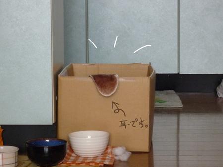 B箱にきえたP1060046