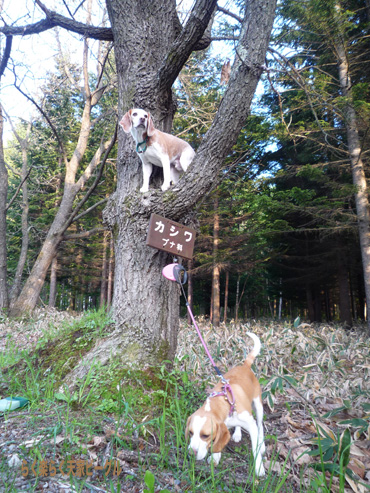 木登りP1060553