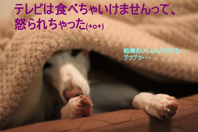 IMG_1942_2 (640x427)