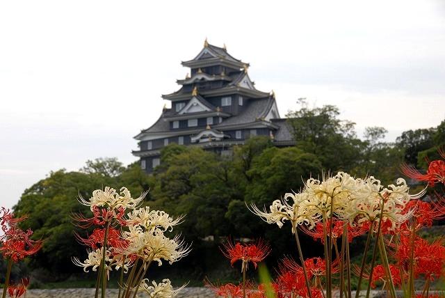 お城と彼岸花5