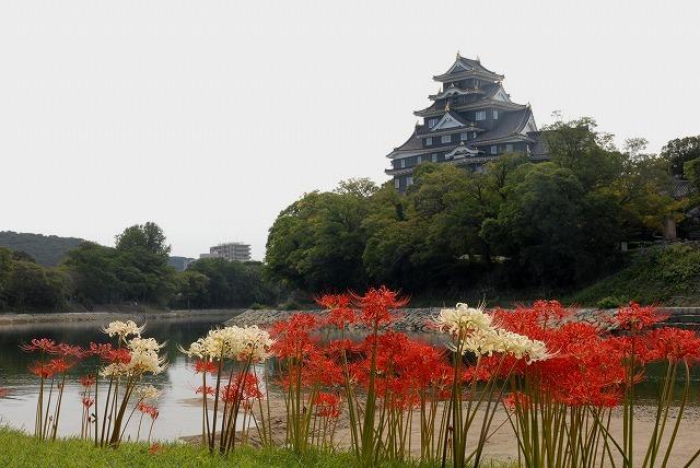 お城と彼岸花7