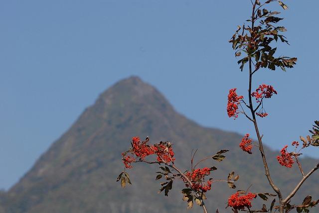 烏ヶ山とナナカマド