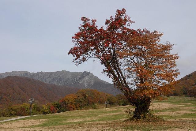 ナナカマドと大山1