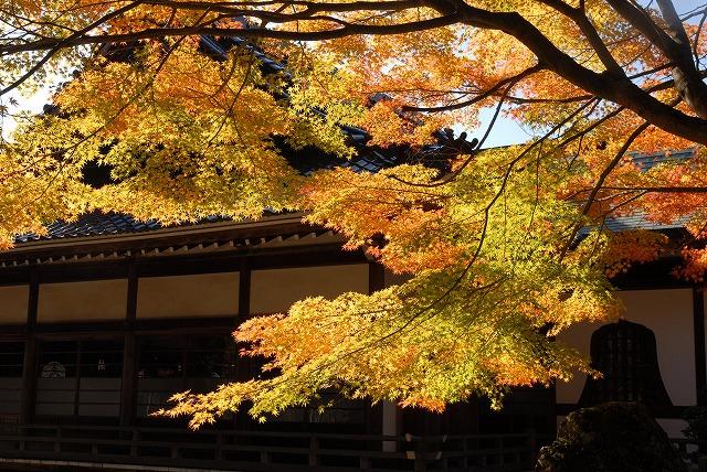龍泉寺の紅葉1