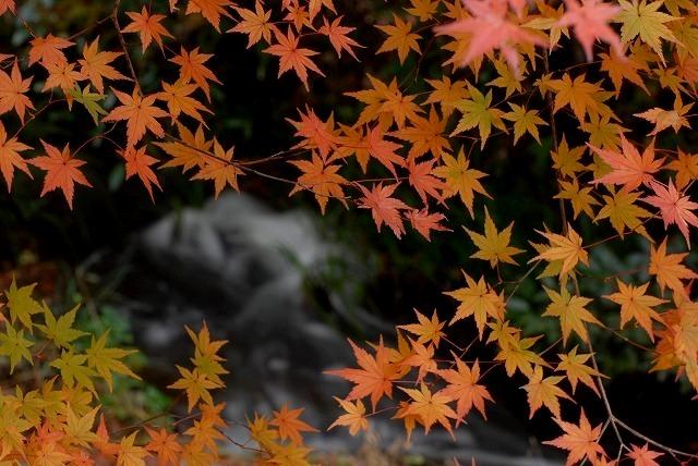 龍泉寺の紅葉30