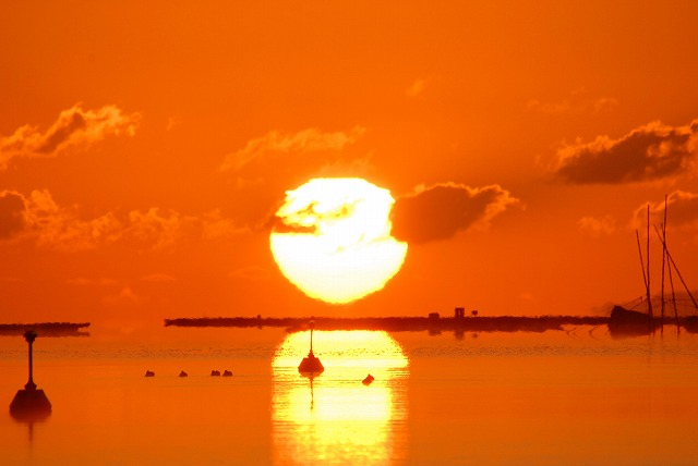 達磨太陽14