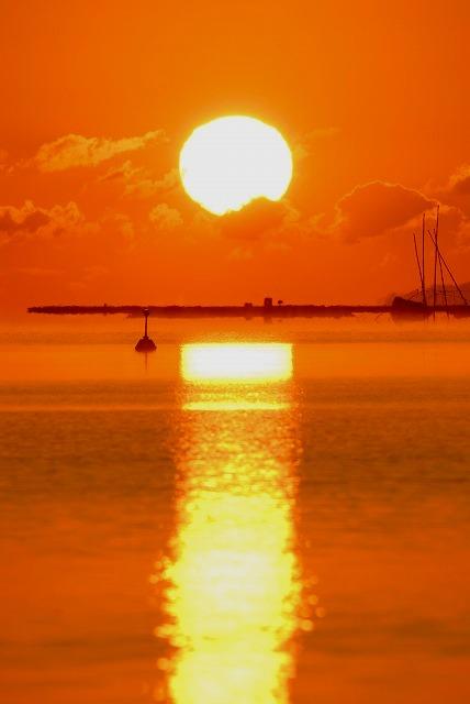 達磨太陽15