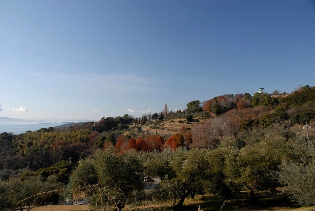 オリーブ園10
