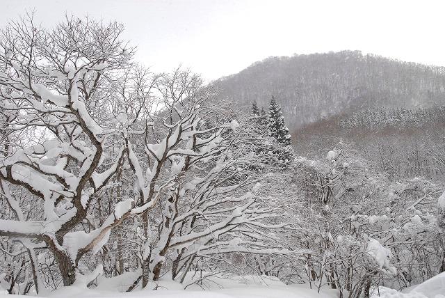 岩井滝付近の雪景色3
