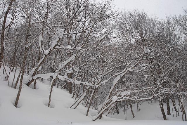 岩井滝付近の雪景色7