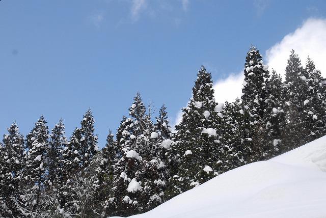 岩井滝付近の雪景色15