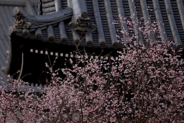 ふしぎ桜2