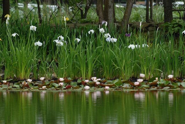 あやめ池公園5