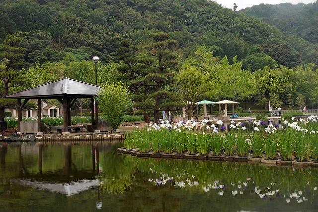 あやめ池公園9